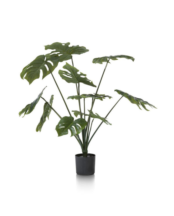 CMA_39123GRN-MONSTERA-1