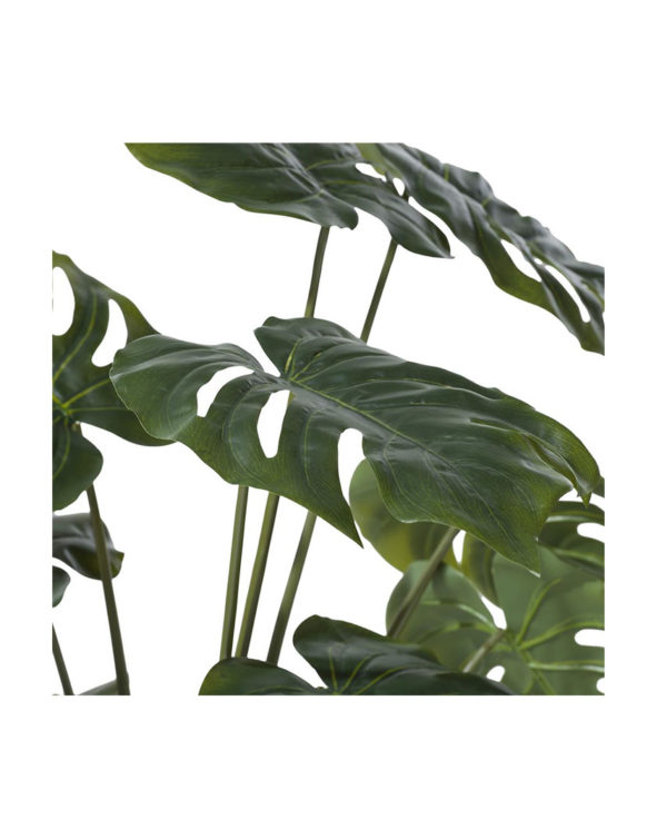 CMA_39123GRN-MONSTERA-2