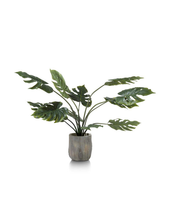 CMA_39123GRN-MONSTERA-3